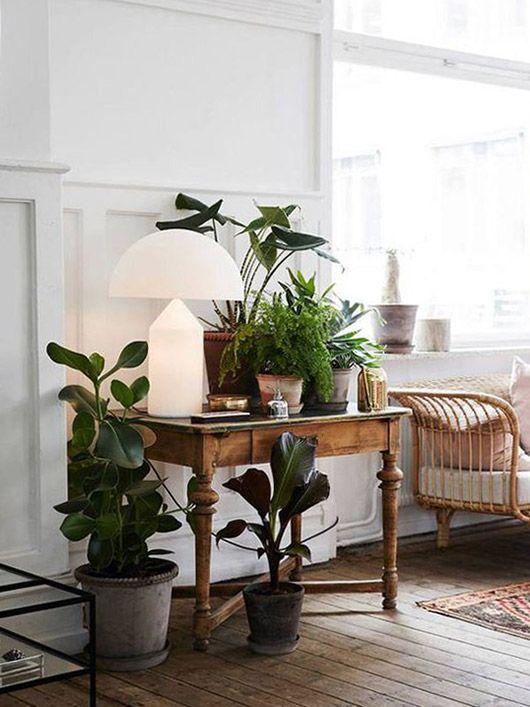 cozy modern (sfgirlbybay) Plantas, Decoración y Interiores - decoracion de interiores con plantas