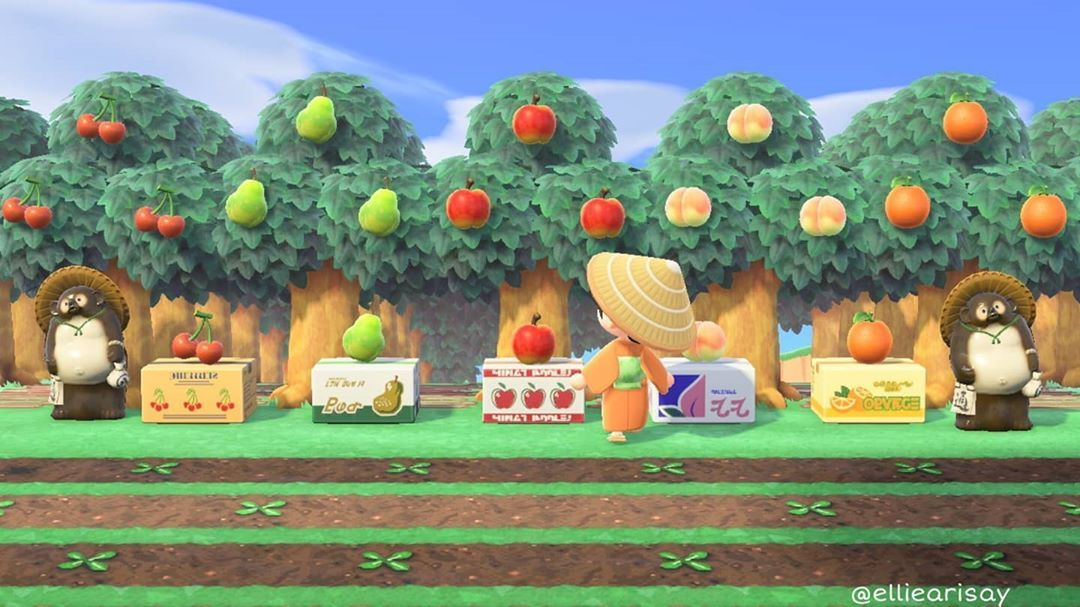Ellie Crossing On Instagram This Is How I Have My Fruit Trees Animalcrossing Acnh Animal Crossing Qr New Animal Crossing Animal Crossing