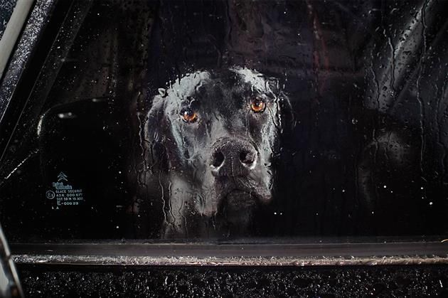 Dogs in Cars by Martin Usborne   :'(
