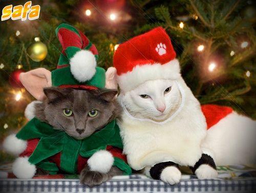 Santa's furry little elves
