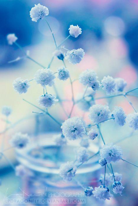 Blume Hintergrunde Iphone Android Blumen Hochzeit Blue Roses Wallpaper Blue Flower Wallpaper Light Blue Roses