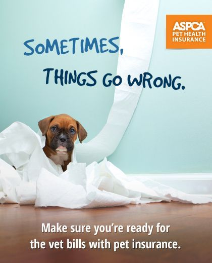 See How We Can Help When Accidents Happen Enroll Today Start Your Coverage Tomorrow With Aspca With Images Pet Insurance Quotes Pet Insurance Reviews Pet Insurance Cost