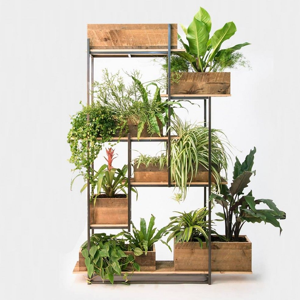 Green Divider | Camera Training | Room with plants, Wood