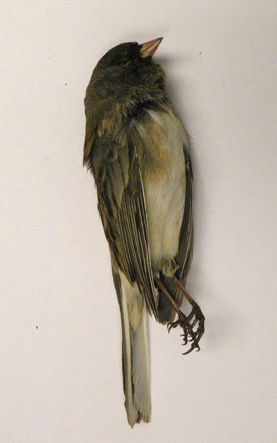 Pin By Mick Reily On Tech Theatre Gh Bird Art Pet Birds Bird