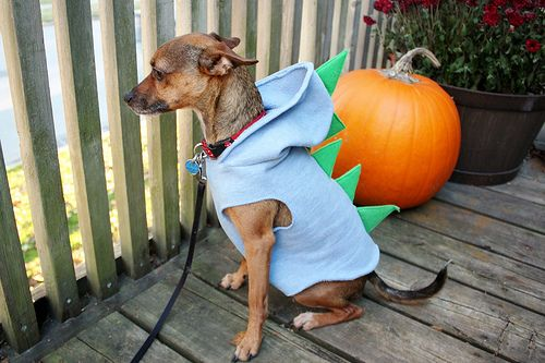 Dog Dinosaur Costume Dog Dinosaur Costume Diy Dog Costumes Dog