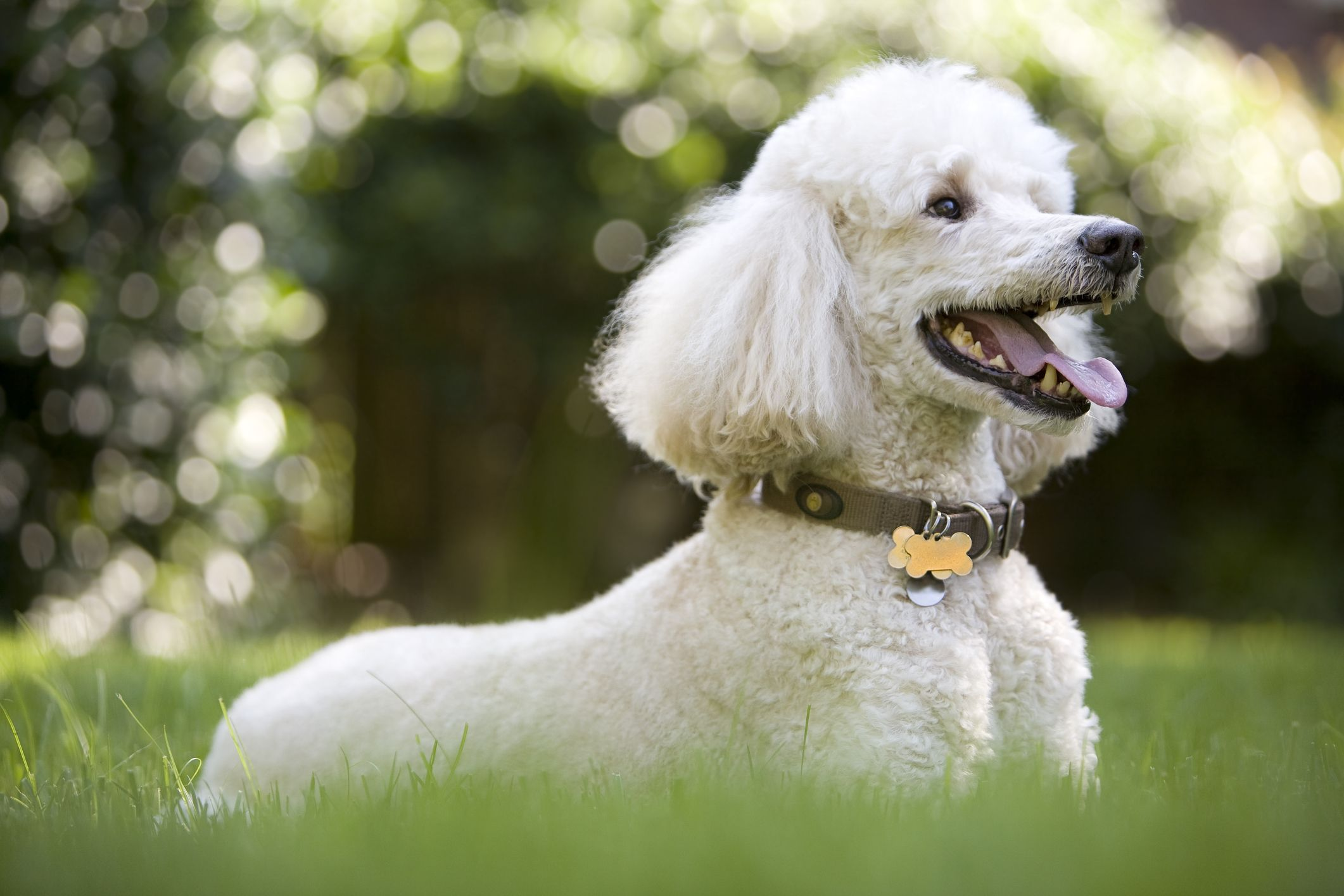 These Are The 25 Smartest Dog Breeds Says Science Dog Breeds