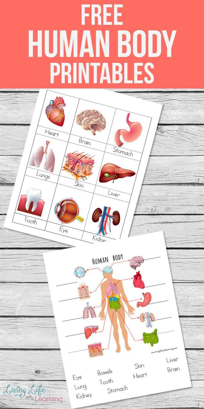 Human Body Printables For Kids Human Body Activities Human Body Printables Free Human Body [ 1400 x 700 Pixel ]