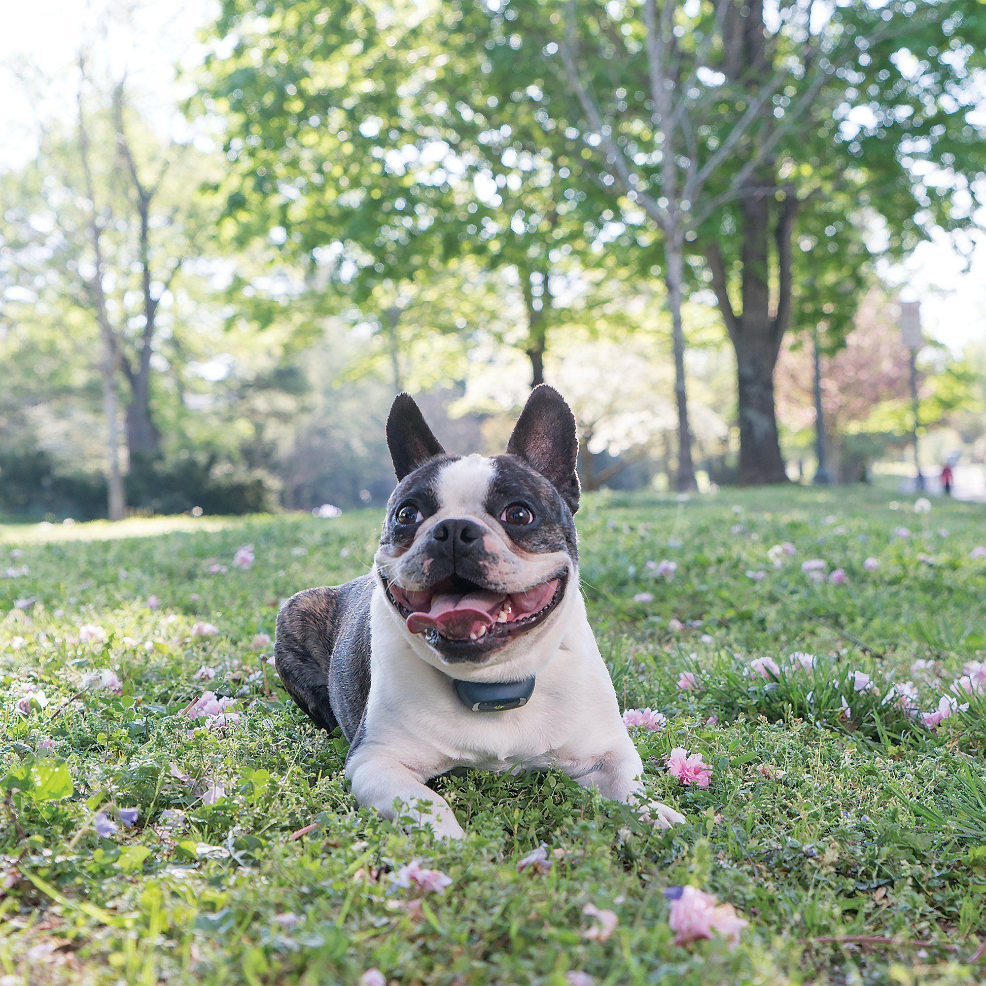 PetSafe AddADog Remote Trainer Lite Dogs, Remote, Trainers
