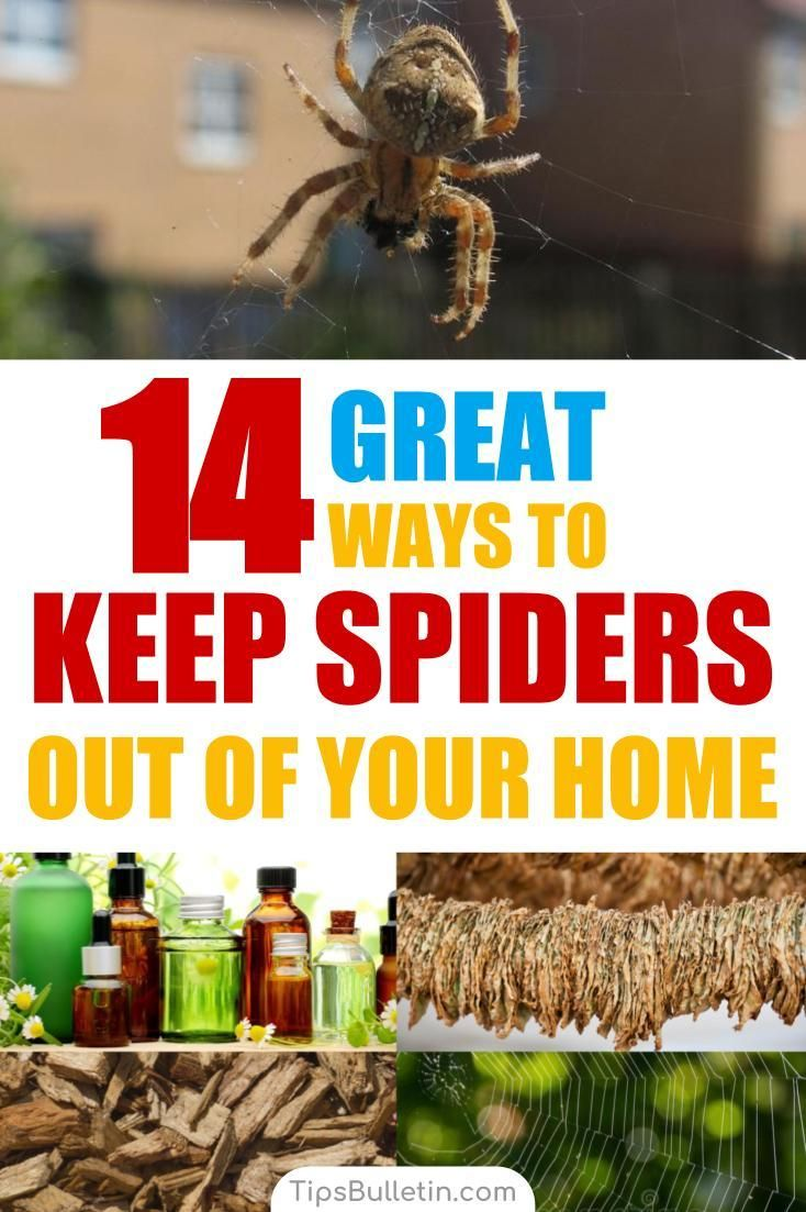 14 Great Ways to Keep Spiders Out of Your Home Naturally Get rid of spiders Spider Cleaning