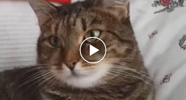 A Reação Do Gato Quando Lhe Colocam Uma Flor Na Cabeça É Hilariante! http://www.funco.biz/como-reage-gato-quando-lhe-colocam-uma-flor-na-cabeca/