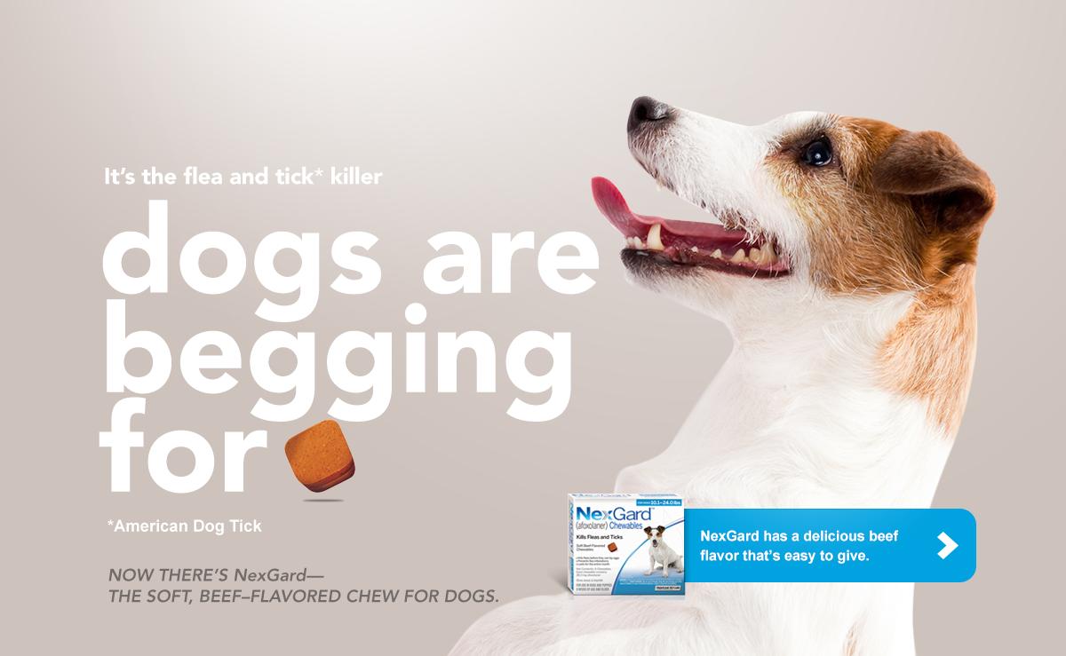 Nexgard Chewables For Puppies