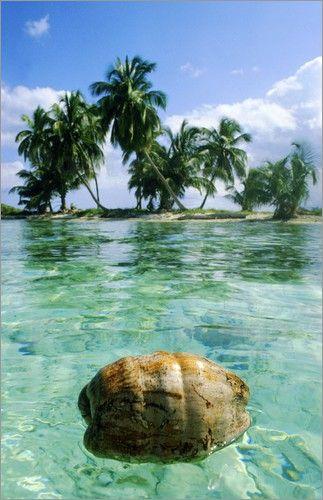 poster kokosnuss treibt im wasser vor palmen palmen bilder bilder poster und kokosnuss. Black Bedroom Furniture Sets. Home Design Ideas