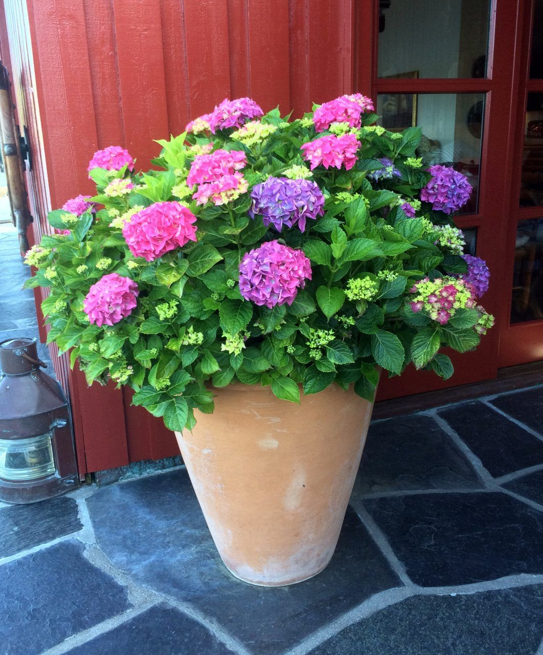 A Plante I Krukker Med Billeder Plante Krukker Blomster