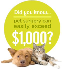 Pet Insurance That Pays Your Vet Direct From Pets Best Cool Pets Best Pet Insurance Pets