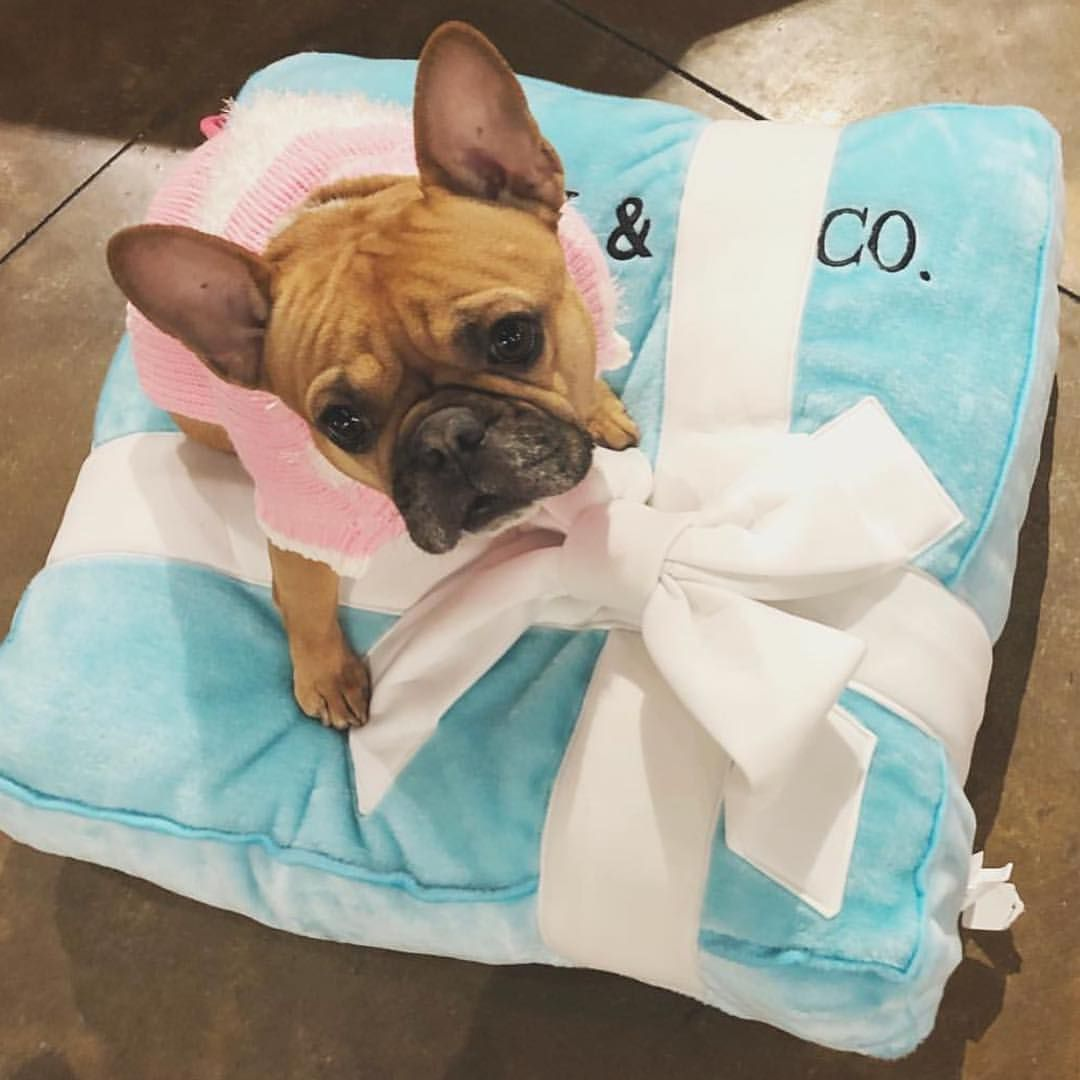 157 Likes 14 Comments Coco Pud Cocoandpud On Instagram Speaking Of Valentine S Day Sniffany Co Is A Pawfect Gift Luxury Pet Pet Shop Bulldog