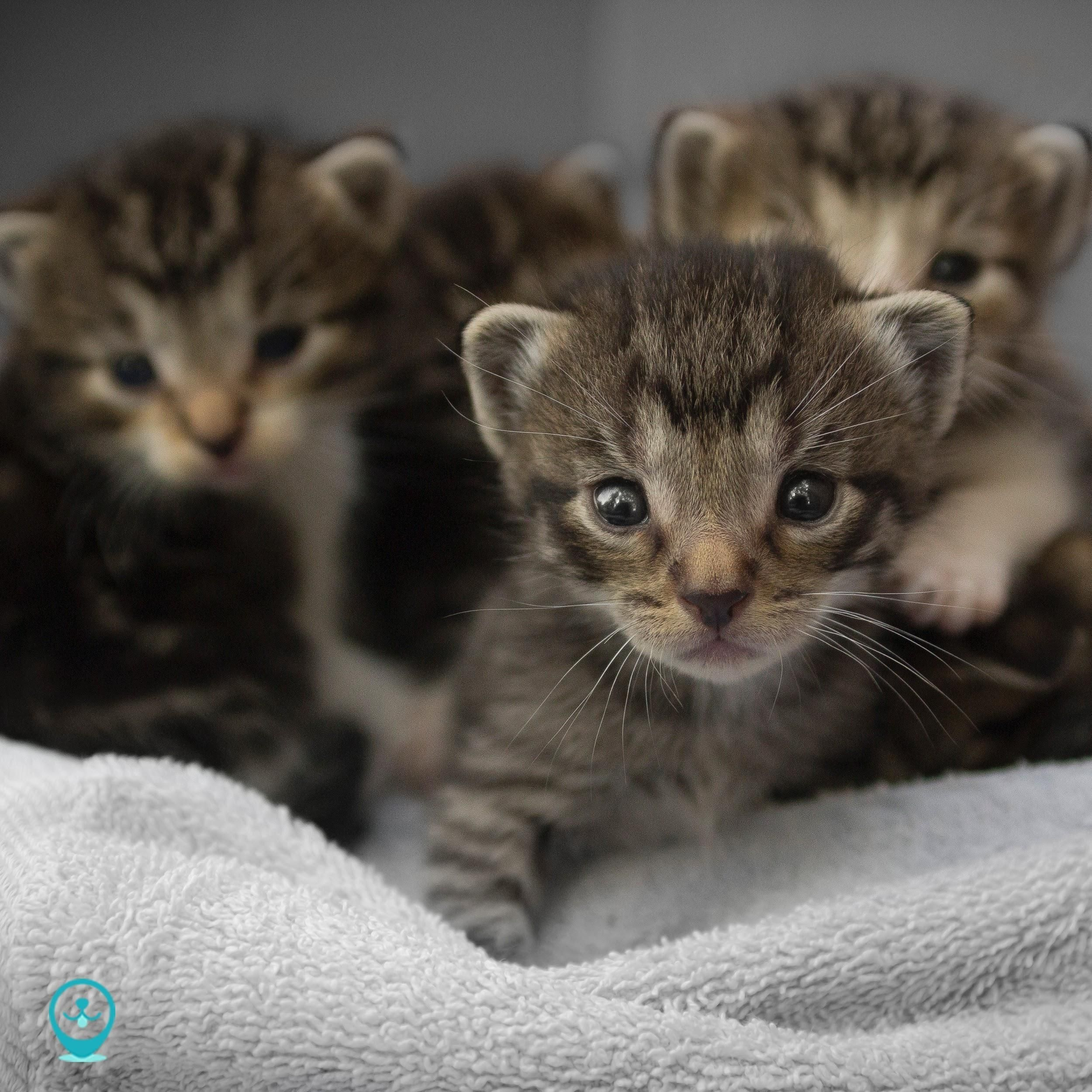 There S Nothing Cuter Than Newborn Kittens Right You Might Actually Think This Is Cuter Catbreed Kittens Cutest Kittens Baby Animals