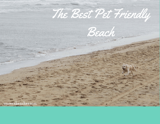 Best Dog Friendly Beach In The East Coast Of Florida Florida
