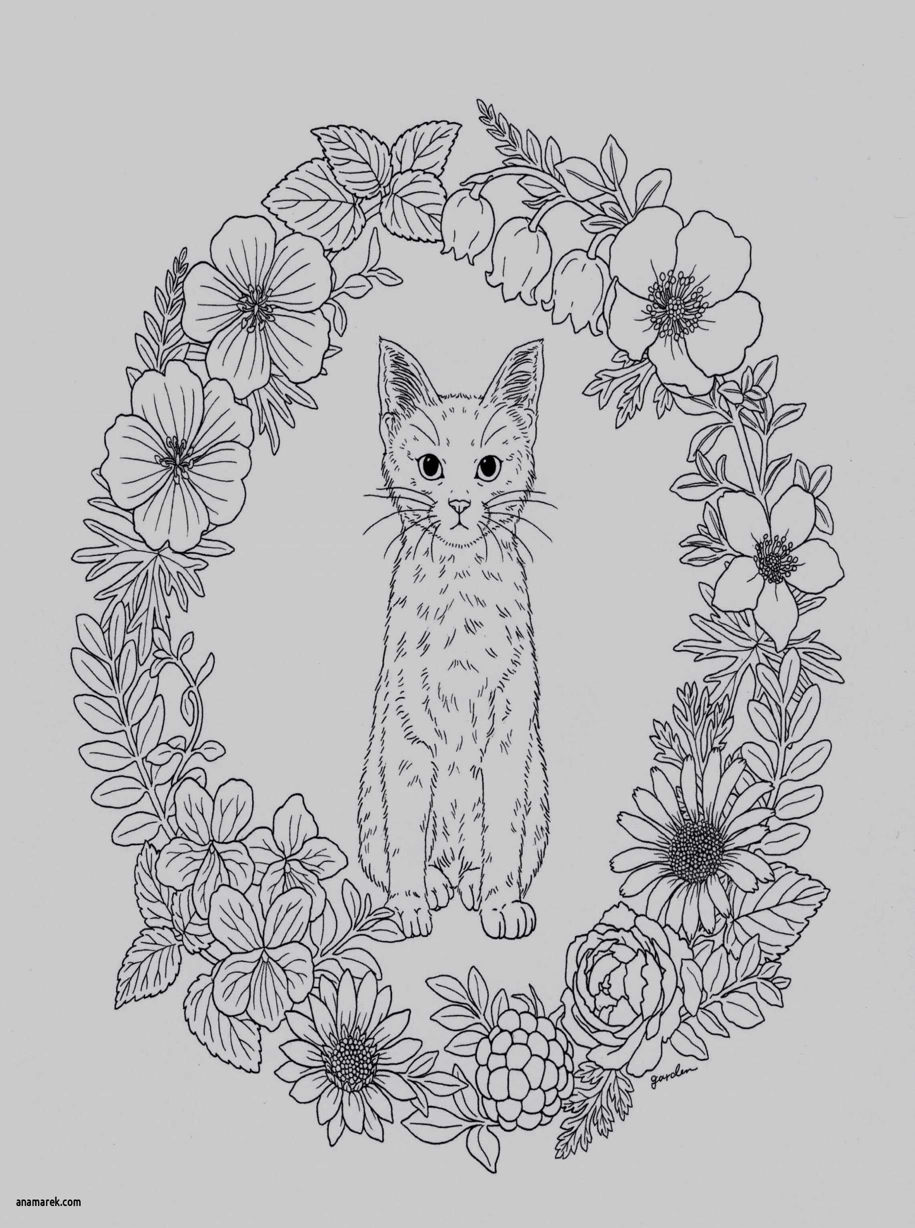 Kitty Cat Coloring Pages Elegant Cute Kitten Coloring Pages Kanta