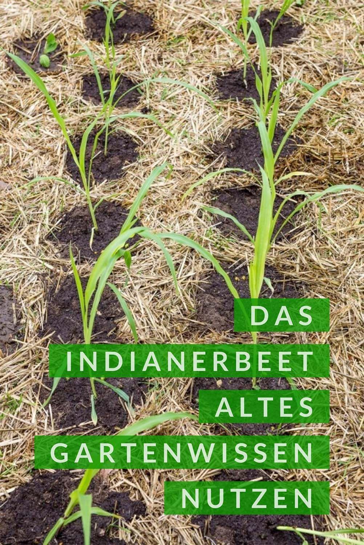 Milpa Beet Mischkultur Aus Bohnen Mais Und Kurbis Pflanzanleitung Mischkultur Kurbis Pflanzen Nutzgarten Anlegen