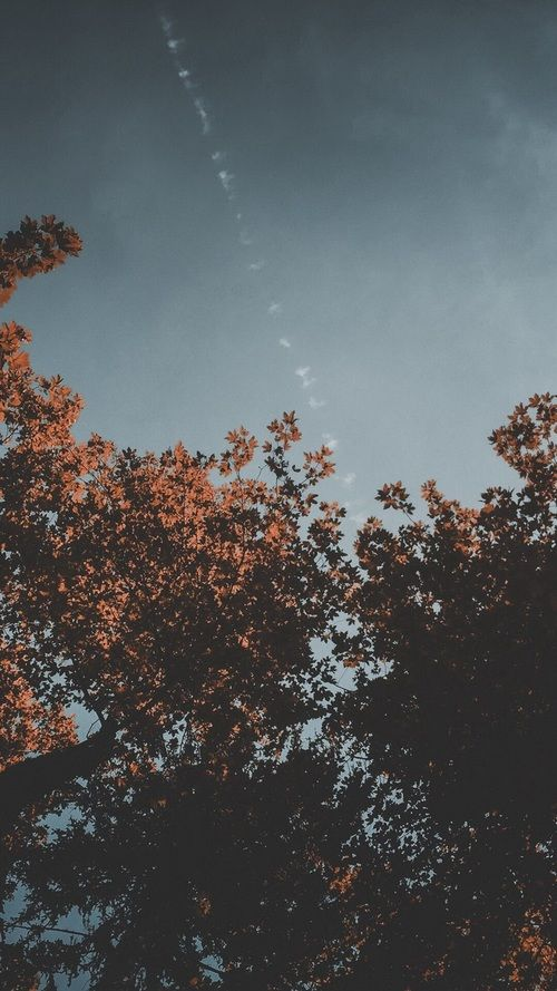 Image about sky in World by  on We Heart It #autumnphotography