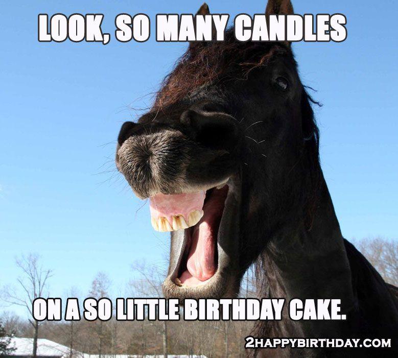 Funny Horse Memes Funny Horse Memes Funny Happy Birthday Song Happy Birthday Horse