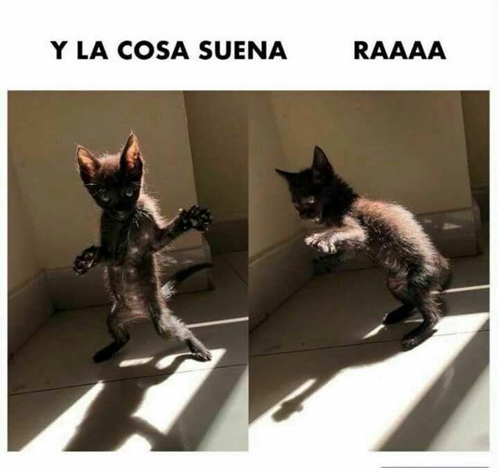 Photo of Para los amantes de los gatos y los memes😂😉