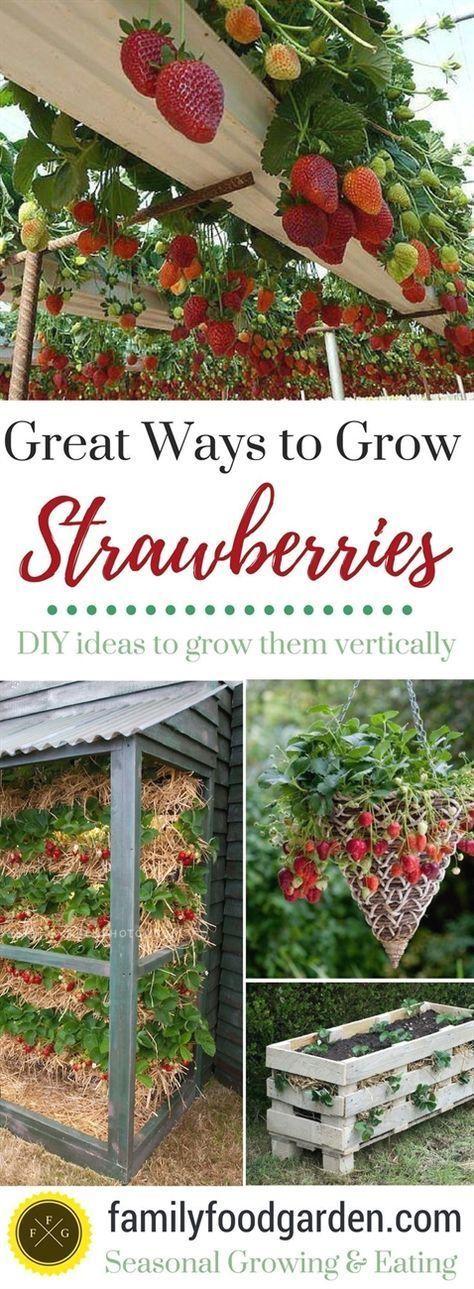 Best Ways to Grow Strawberries in Containers #garden