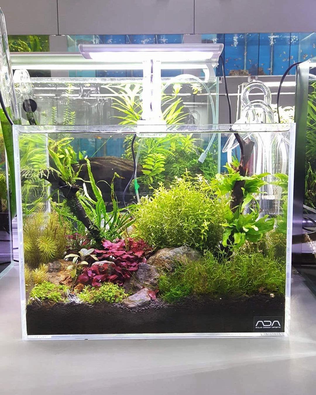 Beautiful Aquascape Freshwater Tank Aquascape Betta Fish Tank Aquarium