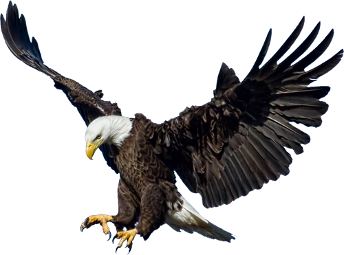 Picture Of Eagle Png Eagle Images Bald Eagle Eagle