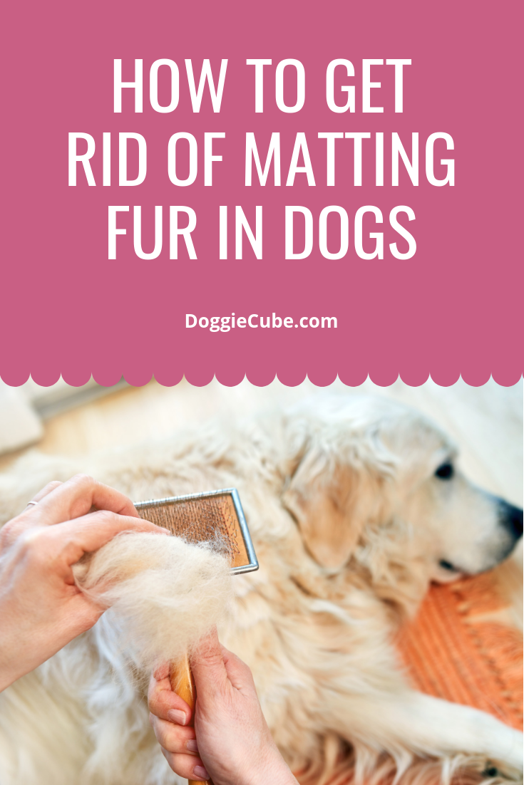 2ddc3833d5fe51e044b1c143f6c21167 - How To Get Rid Of Matted Hair Clumps On Cats