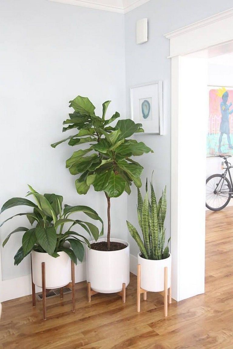 Awesome Mid Century Modern Plants In 2020 Plant Decor Indoor House Plants Indoor Plant Decor