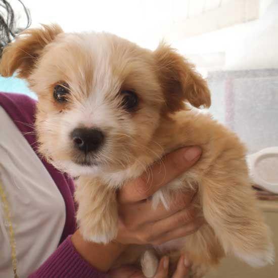 Adopt A Pet With Images Pet Adoption Poor Dog