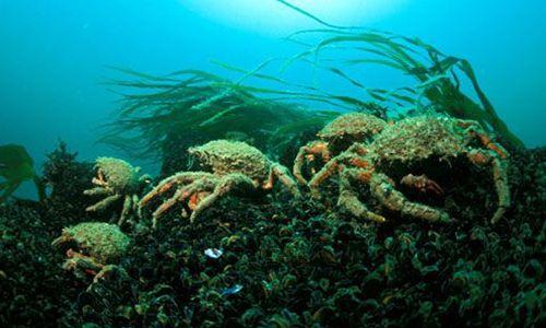 Animaux - Signez la pétition : Relâchons les crustacés en milieu naturel !