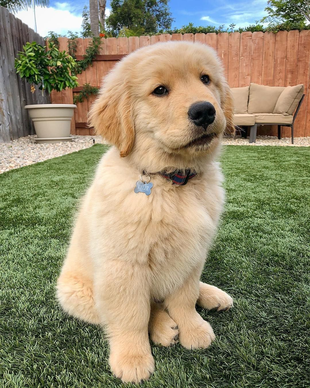 Kyler The Golden On Instagram Whatchu Looking At Never Seen