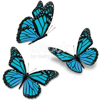 Photo of Three purple butterfly, isolated on white background