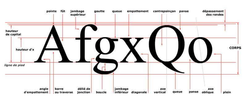 Anatomie de la lettre | dessin de lettres - typographies | Pinterest