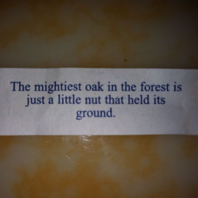 Fortune Cookie The Mightiest Oak In The Forest Is Just A Little Nut That Held Its Ground Fortune Cookie Quotes Funny Fortune Cookies Quality Quotes