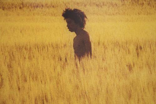 golden grassland by ryan mc ginley