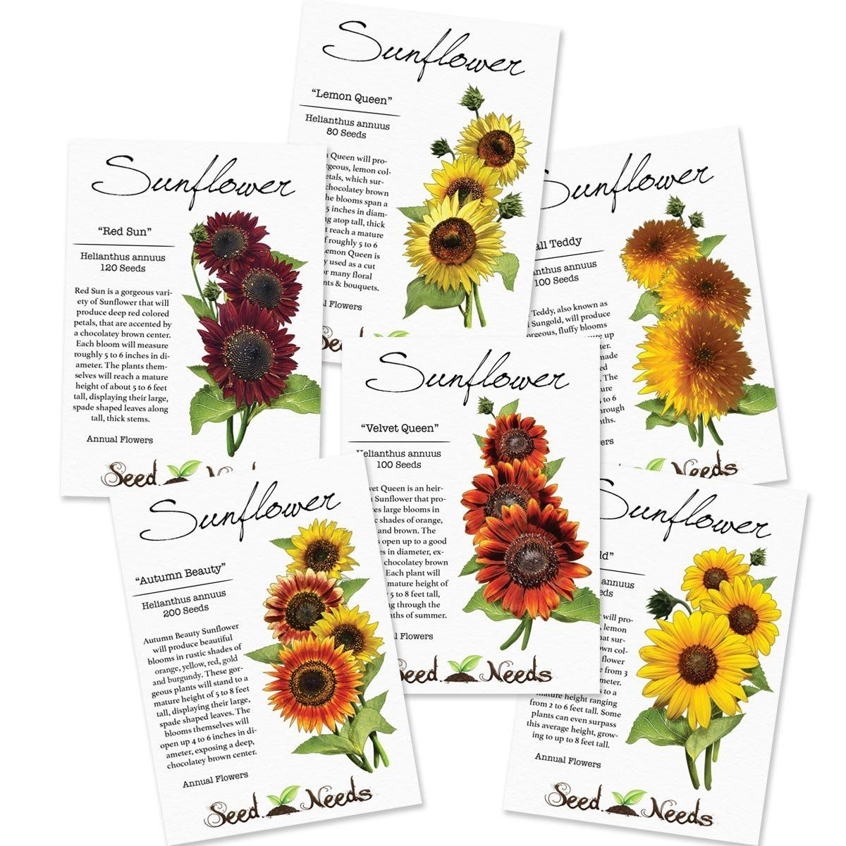 Crazy Sunflower Seed Collection Sunflower Sunflower Seeds Seed Packets