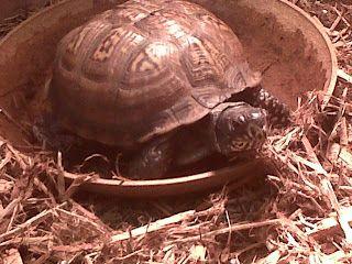 Our Class Pet The Tortoise Class Pet Pets Animals