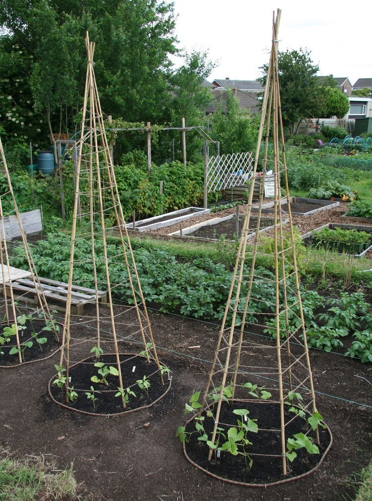 Small Space Version Of The Bean Tee P** Your Poles Can Be 400 x 300