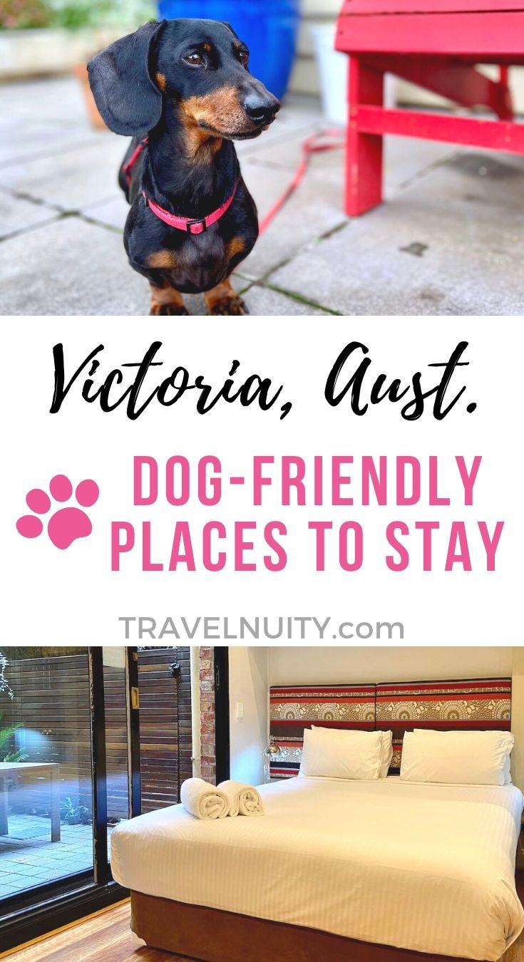 10 Dog Friendly Places To Stay In Victoria Travelnuity In 2020 Dog Friendly Accommodation Dog Friends Pet Friendly Accommodation