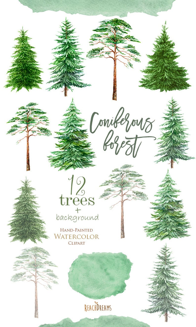 Watercolor Clipart Spruce Pine Conifer trees Forest wood | Etsy
