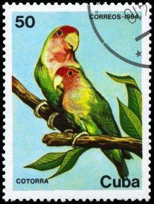 Cuba 1984 - Cotorras