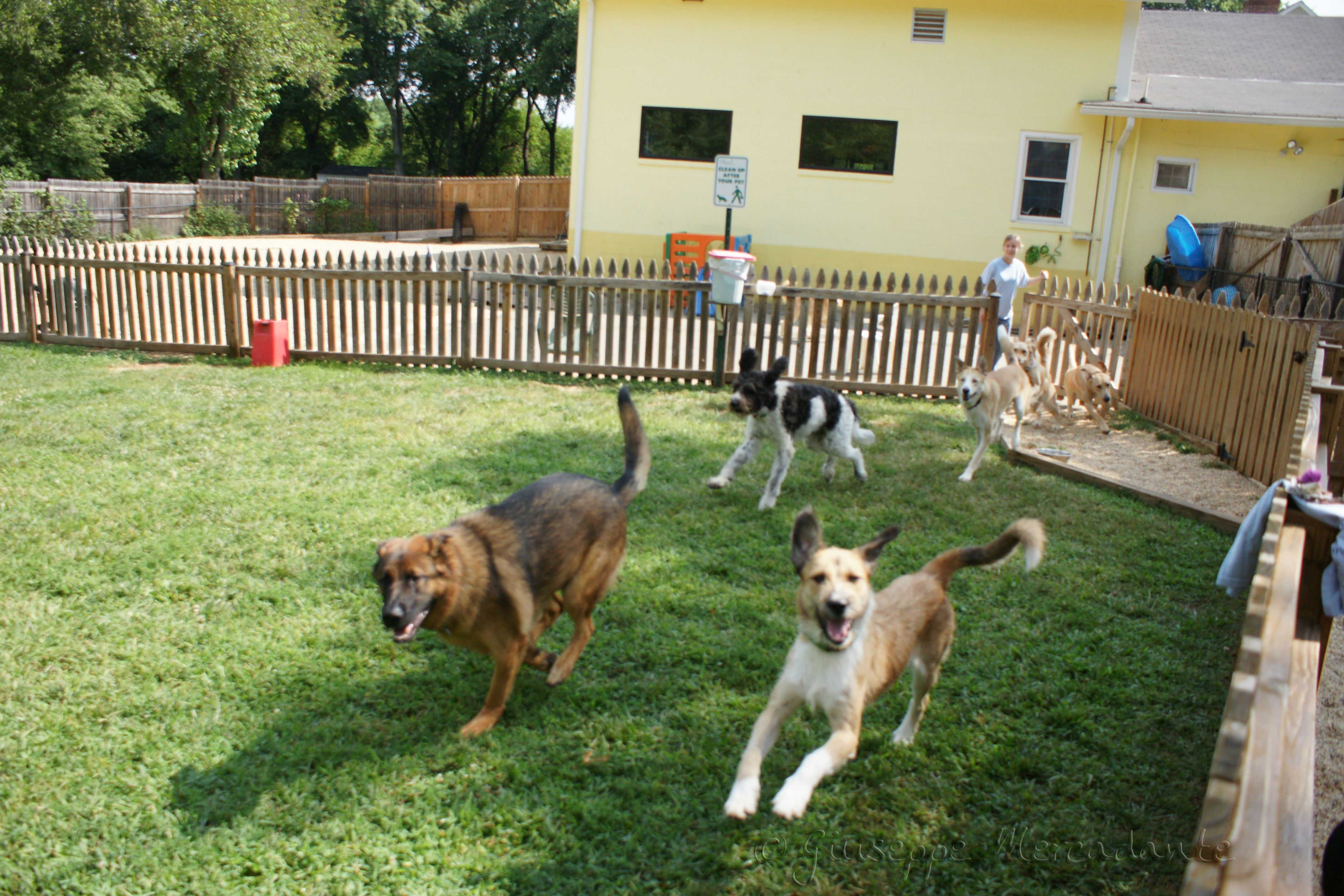 Dog Boarding And Day Care Services Salt Lake City Dog Daycare Dog Day Care Center Dog Boarding