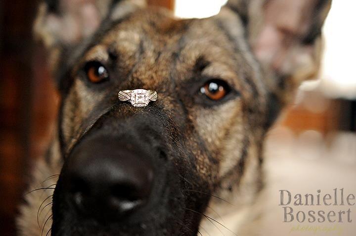 My German Shepherd Dog With My Engagement Ring 3 German