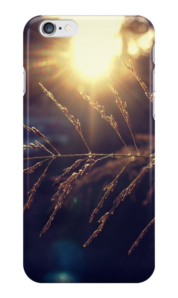 'Sunset lights the grass from A Gardener's Notebook' iPhone Case by Douglas E.  Welch