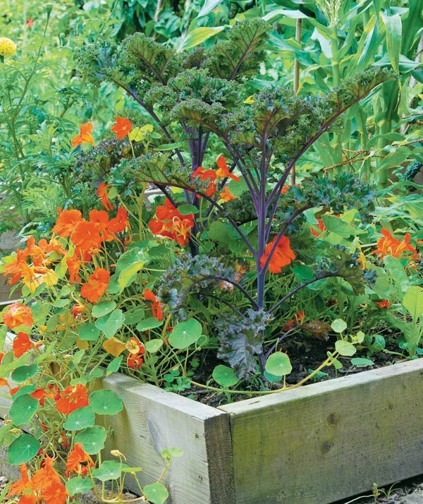 How to create an edible landscape perennials kale and veggies grow your perennials and veggies together like these flowers and kale from the edible landscape by mightylinksfo