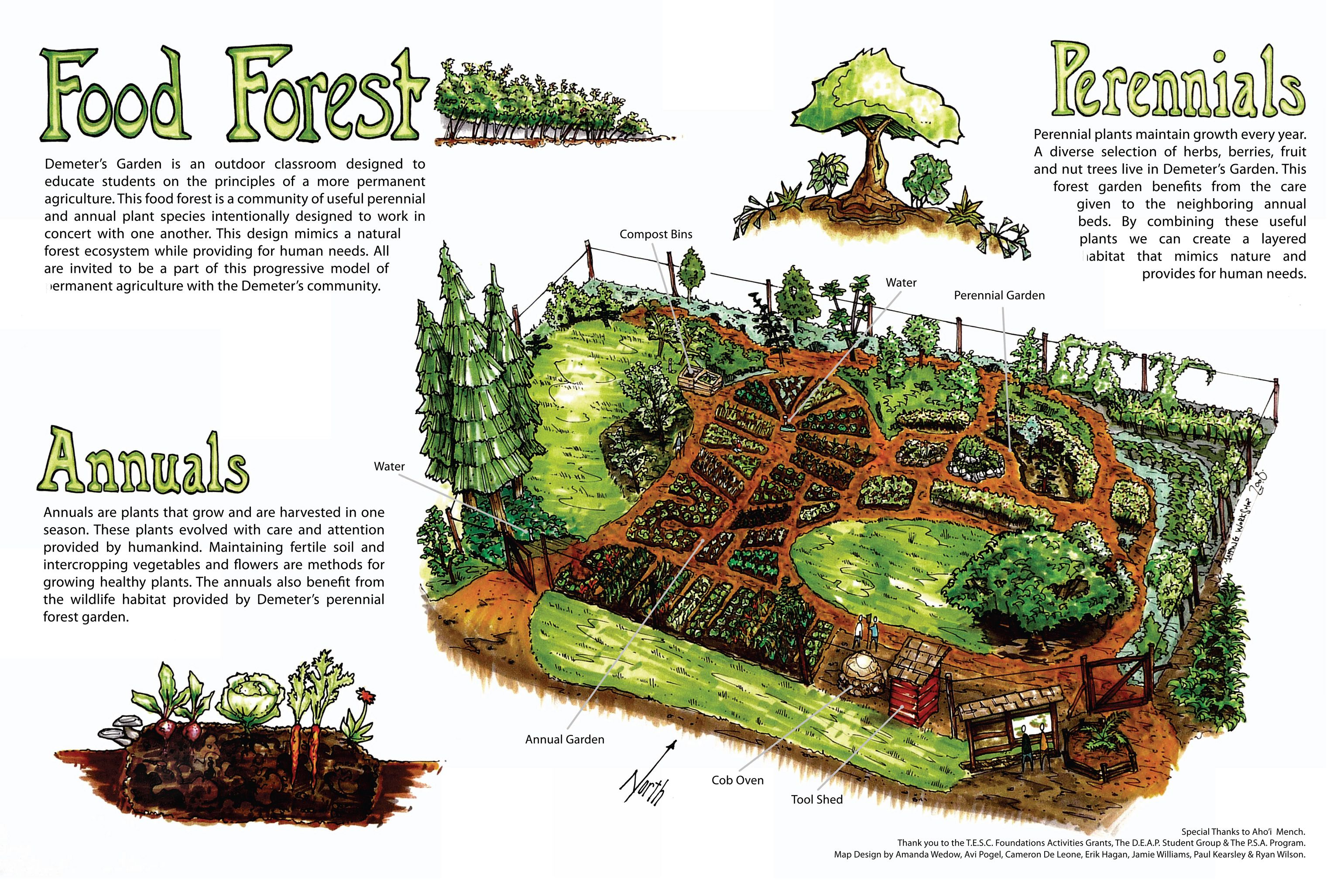 Food forest conceptual diagram by Full Circle Tree Crops