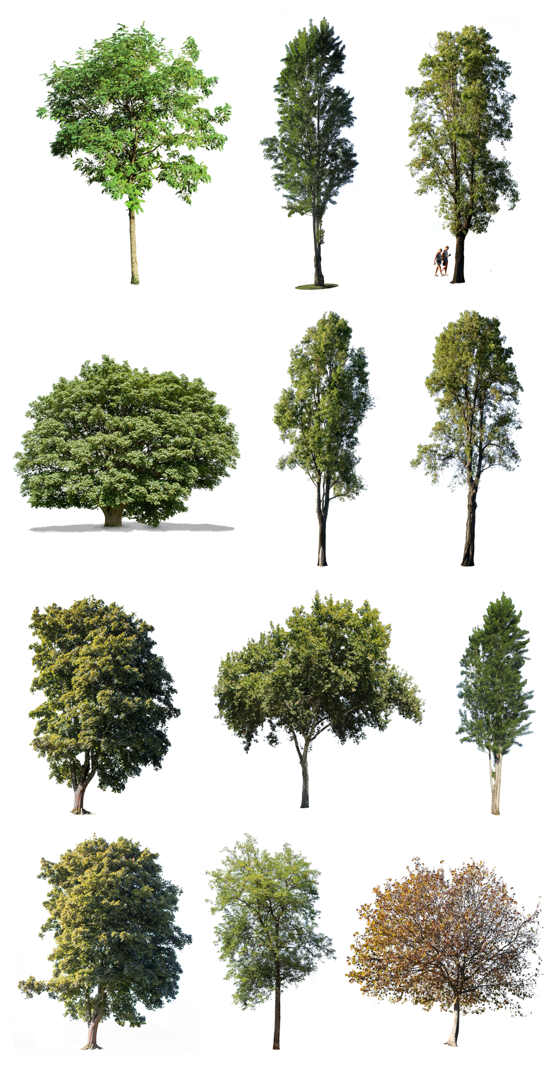 Photo of 12 LARGE TREES PACK